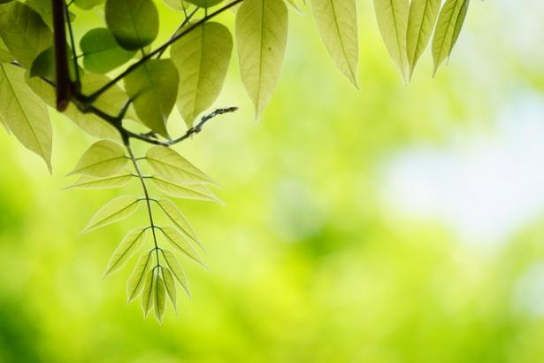 爽やかな植物のイメージ写真