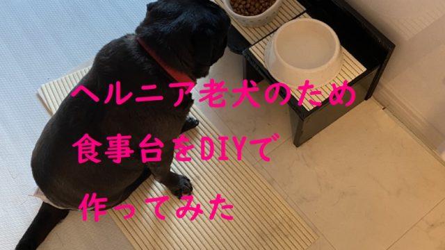 ヘルニア老犬のため食事台を作ってみた